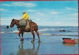 Garnaalvisser Te Paard Belgische Kust Grote Kaart Grand Format FOLKLORE Visserij Peche A Crevettes - Folklore