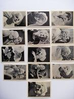 JEAN HARLOW, Lotto Di 13 Figurine - Metro Godwin Mayer - Attori