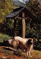 Argut Dessus Boutx Le Mourtis Canton Saint Béat Chien Des Pyrénées Tarzan - Autres Communes
