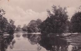 CALCUTTA- THE LAKE, BOTANICAL GARDENS - India