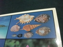 Conchiglia Shell  COQUILLES   CONCHAS   MAHE SEYCHELLES VEDUTE FRANCOBOLLO SEYCHELLES - Seychelles