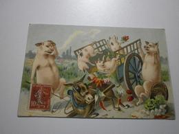 Cochons Humanisés, Accident De Charette (A8p11) - Cochons