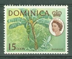 Dominica: 1963/65   QE II - Pictorial    SG172   15c      MH - Dominique (...-1978)