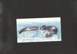 WWF Whales Stationery Card Of RSA - W.W.F.