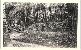 Coconut Plantation, Trinidad - Trinidad