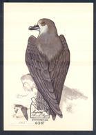 Portugal MADEIRA 1987 Maximum Card: Fauna Bird Vogel Oiseau: The Zino's Petrel Or Freira (Pterodroma Madeira) - Vögel