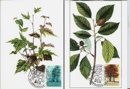 Année Eur. De Conservation De La Nature  : Arbre: Bouleau Et Hêtre  N° 1526/7  Obl. St . Amandsberg 07/03/70 - Maximum Cards