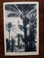 L9/28 Libye. Raccoglitore Di Datteri - Libya