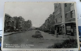 Woluwe-Saint-Lambert. Avenue Des Cerisiers - Woluwe-St-Lambert - St-Lambrechts-Woluwe
