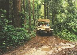 CP - PHOTO - LE GABON EN TROPICOLOR - RANDONNEE EN FORET PRES D'EKWATA VILLAGE - A 770 M - TROPICOLOR - Gabón