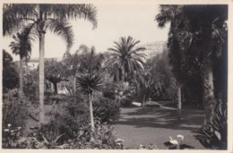 AQ22 Monte Carlos, Jardins Du Casino - Grimaldi Postcard 614 - Casino