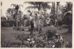 AQ22 Monte Carlos, Jardins Du Casino - Grimaldi Postcard 617 - Casino