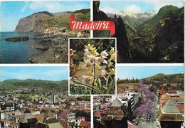 MADEIRA - Madeira