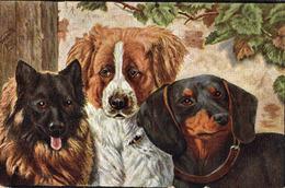 Une Belle Triplette - Hunde