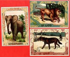 Lot 3 Grands Chromos Loup Lion Elephant Belle Frise Art Déco Légendes Au Dos Par Eugène Muller - Chromos