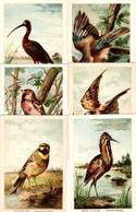 Gros Lot De 22 Grands Chromos Illustrés Sur Les Oiseaux Avec Légende Explicative Au Verso - Animaux