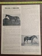 ENV 1903 L HISTOIRE DU PUR SANG CHEVAL DARLEY ARABIAN GODOLPHIN - Colecciones