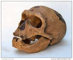 MOULAGE FOSSILE Crane Homme Neandertal La Chapelle Hominid Skull - Fossiles