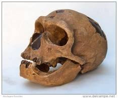 MOULAGE FOSSILE Crane Homme Neandertal La Chapelle Hominid Skull - Fossielen