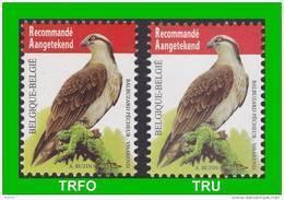 BUZIN - 4090** Balbuzard Pêcheur / Visarend - Les 2 Papiers (TRFO Et TRU) - 1985-.. Pájaros (Buzin)