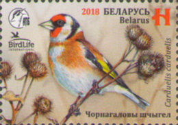 Belarus Weissrussland 2018 MNH** Mi. Nr. 1243 Bird Of The Year Goldfinich - Belarus