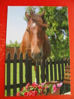 Horse - Chevaux