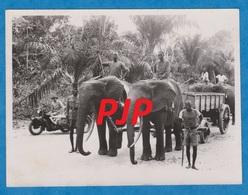 Photo - Afrique - Congo - 1950 - Sydecar - Garde Civil - éléphants - Brrrrrrr - Afrique