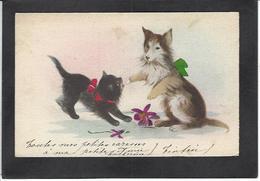 CPA Chat Cat éditeur MGA 811 écrite - Katten