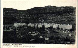 GROENLAND -- Troupeau De Moutons - Greenland