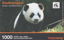 Thailand - Panda - Thaïlande