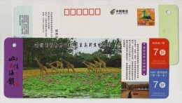 Giraffe,China 2013 Qinhuangdao Wild Animal Zoo Scenic Spot Admission Ticket Pre-stamped Card - Giraffen