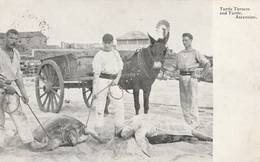 Ile  D'Ascension -  1909 - Turtle Turner And Turtle  - Scan Recto-verso - Ascension