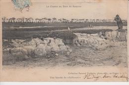 CHASSE - BAIE DE SOMME - BANDE DE SIFFLEURS - OISEAUX - France
