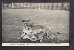 CPA 75 - PARIS - Jardin D' Acclimatation - ZOO La Lionne LENEE Et Ses Trois Lionceaux Nés Le 14 Juillet 1905 Ménagerie - Parcs, Jardins