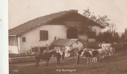 ***  ELEVAGE  *** ** à La Montagne - Envoyée De Chaux De Fonds (Suisse ) TTBE Vaches Devant La Ferme - Elevage