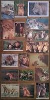 Lot De 24 Cartes Postales LIONS Lionnes Lionceaux - Lions