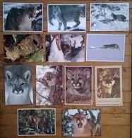 Lot De 12 Cartes Postales Cougar Puma Bobcat Mountain Lion - Cats