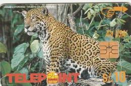 Peru - Jaguar U Otorongo - Pérou