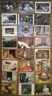 Lot De 24 Cartes Postales CHATS /b - Chats