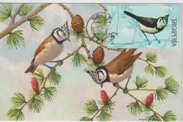 Albanie Carte Maximum Oiseaux 1971 Mésange 1310 - Albania