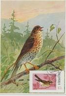Albanie Carte Maximum Oiseaux 1974 Grive 1522 - Albania