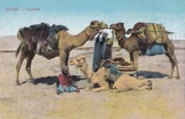 AQ24 Cairo, Camels - Cairo