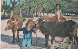 AQ24 Cairo, Native Child And His Buffalos - Cairo