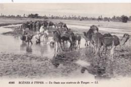 AQ24 Scenes Y Types, Un Oasis Aux Environs De Tanger - LL - Tanger