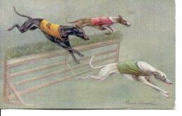 Belle Illustrée Signée Persis Kirmsz. LEVRIERS GREYHOUNDS EN COURSE 4 - Chiens