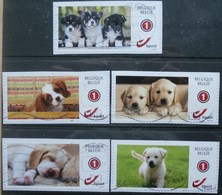België 2017 Puppies Honden Chiens - Gebraucht
