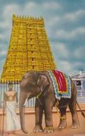 CARTOLINA - POSTCARD - INDIA - EAST TOWER AND TEMPLE ELEPHANT - India