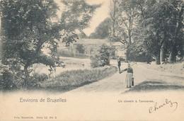 CPA - Belgique - Tervuren - Un Chemin à Tervuren - Tervuren