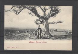 Etiopia ,Cartolina Postale Afrancata E Timbrata Non Viaggiata ,editore A.Michel-Harar ,perfetta E Splendida - Etiopia