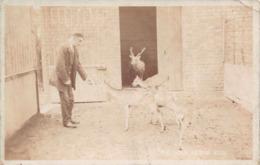 R123532 Deer At The Zoo - Postales